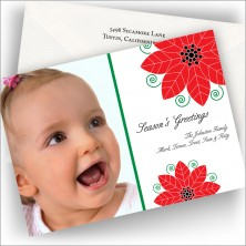 Poinsettia Greetings Photo Cards